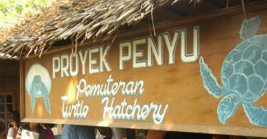 Turtle Hatchery Pemuteran Bali
