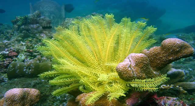 Bali Barat Snorkeling