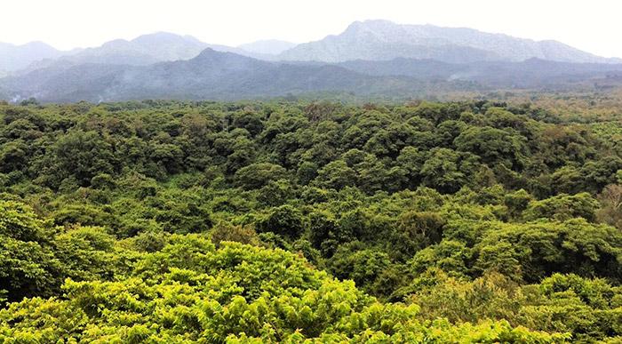 West Bali Nature