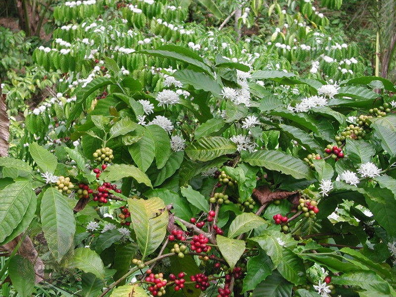 Hike through a coffee plantation