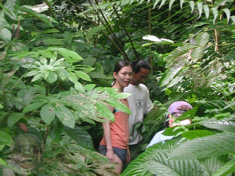 Then continue, following a track through the jungle