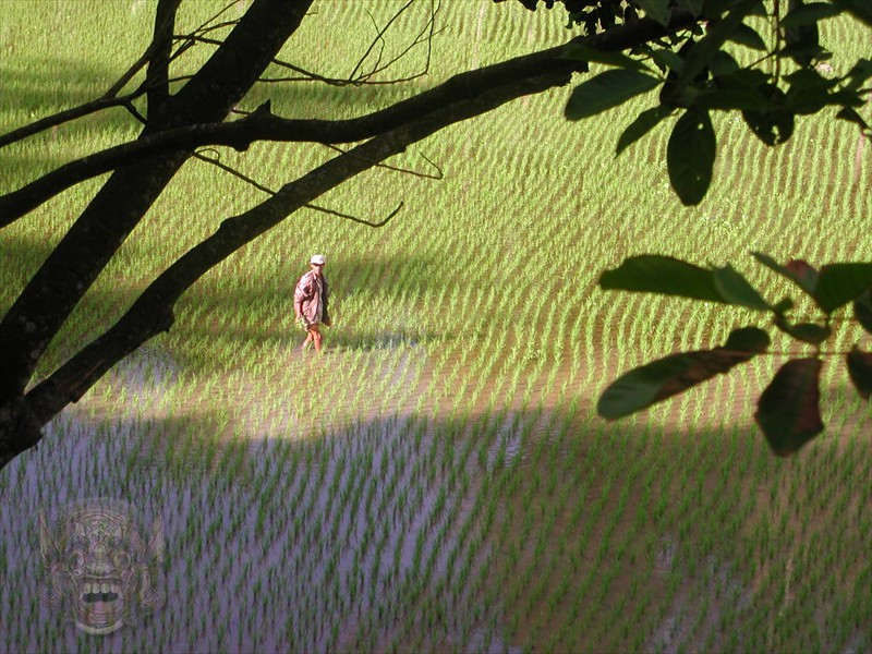 ...with beautiful rice field views on the way